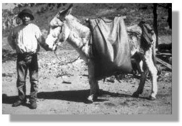 20060930131913-burro.jpg
