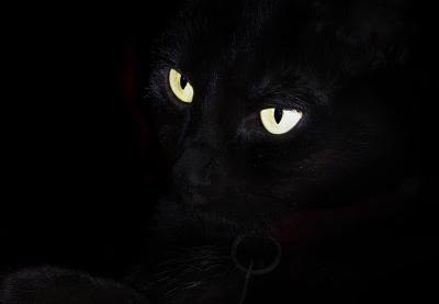 20111003184727-gato-negro.jpg