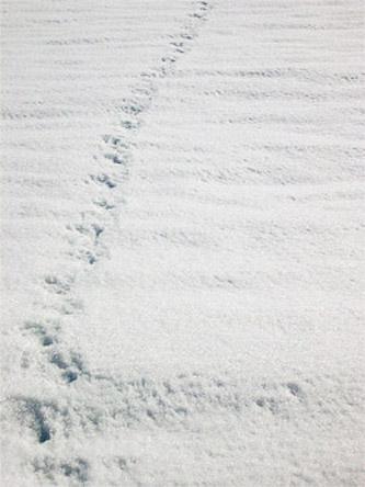 20120616003821-huellas-de-corzo-en-la-nieve.jpg