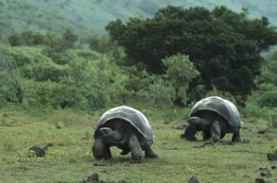 20130219095625-tortugas-galpagos.jpg