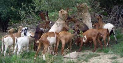 20091109133625-embalse-cabras.jpg