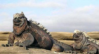 20100129142051-iguana.jpg